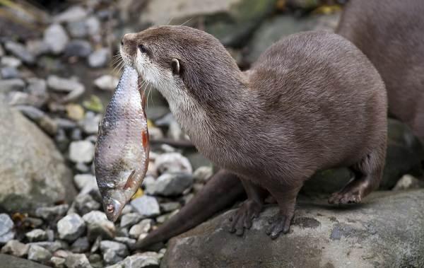 Животные-Краснодарского-края-Описания-названия-и-виды-животных-Краснодарского-края-33