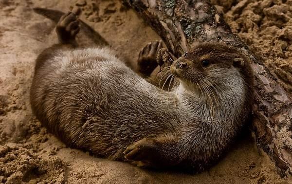 Животные-Краснодарского-края-Описания-названия-и-виды-животных-Краснодарского-края-34