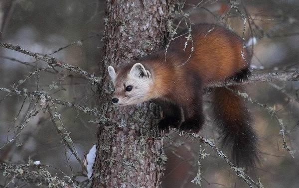 Животные-Краснодарского-края-Описания-названия-и-виды-животных-Краснодарского-края-35