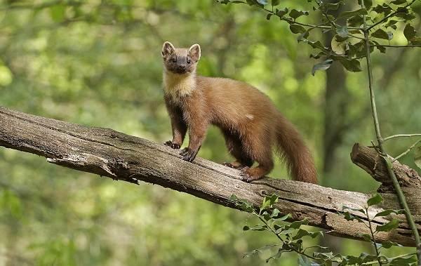 Животные-Краснодарского-края-Описания-названия-и-виды-животных-Краснодарского-края-36