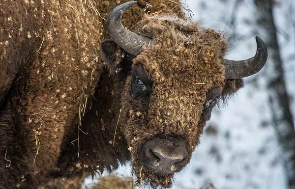 Животные-Краснодарского-края-Описания-названия-и-виды-животных-Краснодарского-края-4