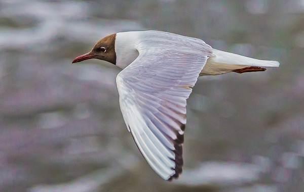 Животные-Краснодарского-края-Описания-названия-и-виды-животных-Краснодарского-края-40