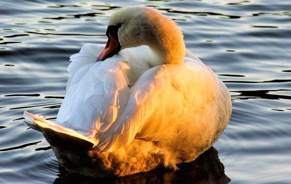 Животные-Краснодарского-края-Описания-названия-и-виды-животных-Краснодарского-края-44