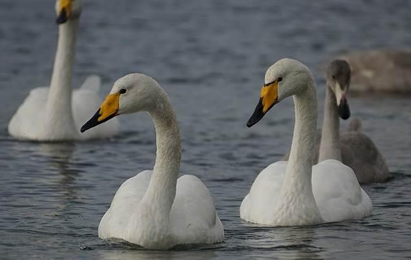 Животные-Краснодарского-края-Описания-названия-и-виды-животных-Краснодарского-края-45