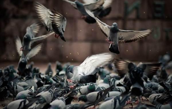 Животные-Краснодарского-края-Описания-названия-и-виды-животных-Краснодарского-края-48