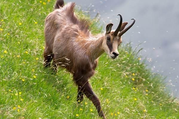 Животные-Краснодарского-края-Описания-названия-и-виды-животных-Краснодарского-края-6