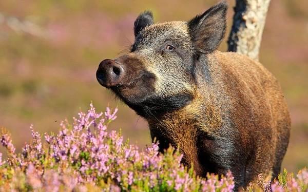 Животные-Краснодарского-края-Описания-названия-и-виды-животных-Краснодарского-края-60