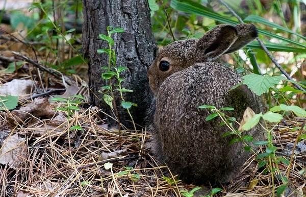 Животные-Краснодарского-края-Описания-названия-и-виды-животных-Краснодарского-края-64