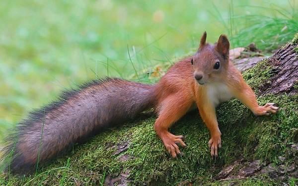Животные-Краснодарского-края-Описания-названия-и-виды-животных-Краснодарского-края-66