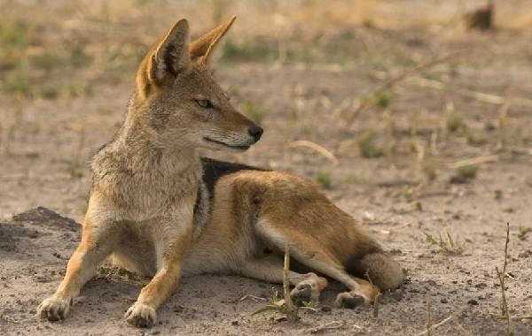Животные-Краснодарского-края-Описания-названия-и-виды-животных-Краснодарского-края-68