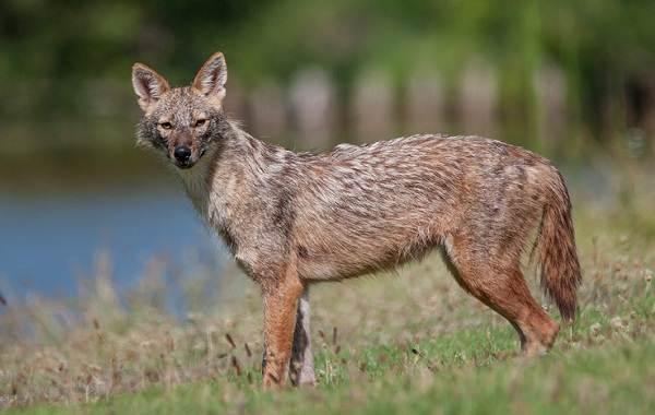 Животные-Краснодарского-края-Описания-названия-и-виды-животных-Краснодарского-края-69