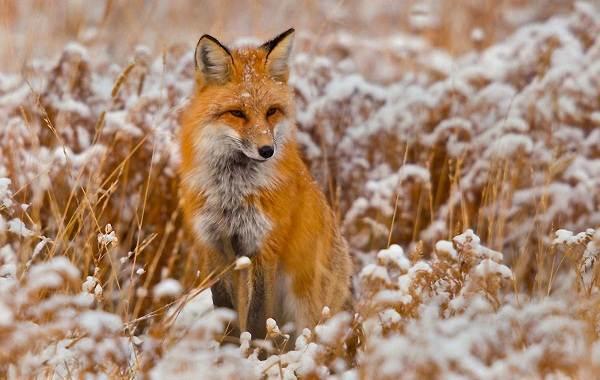 Животные-Краснодарского-края-Описания-названия-и-виды-животных-Краснодарского-края-72