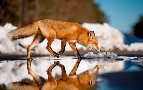 Животные-Краснодарского-края-Описания-названия-и-виды-животных-Краснодарского-края-73