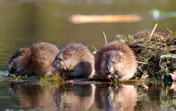 Животные-Краснодарского-края-Описания-названия-и-виды-животных-Краснодарского-края-76