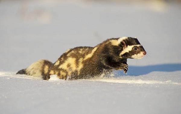 Животные-Краснодарского-края-Описания-названия-и-виды-животных-Краснодарского-края-80