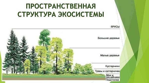Что-такое-биоценоз-Виды-структура-роль-и-примеры-биоценоза-18