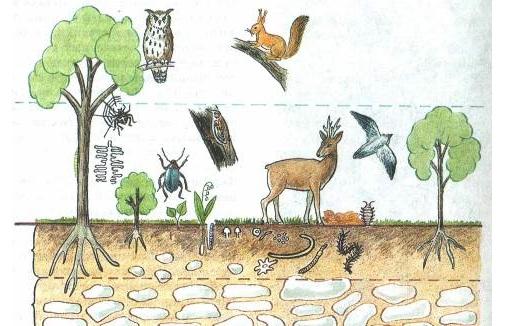 Что-такое-биоценоз-Виды-структура-роль-и-примеры-биоценоза-23