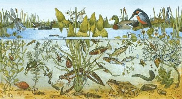 Что-такое-биоценоз-Виды-структура-роль-и-примеры-биоценоза-24