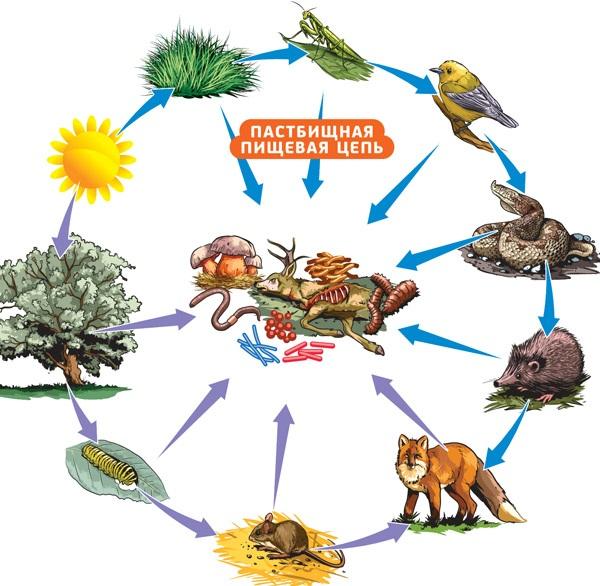 Что-такое-биоценоз-Виды-структура-роль-и-примеры-биоценоза-26