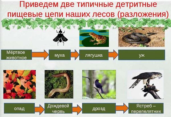 Что-такое-биоценоз-Виды-структура-роль-и-примеры-биоценоза-27