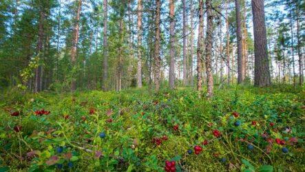 Что такое биоценоз? Виды, структура, роль и примеры биоценоза