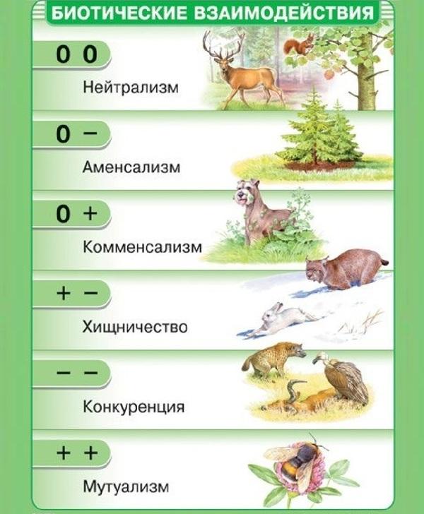 Что-такое-биоценоз-Виды-структура-роль-и-примеры-биоценоза-30