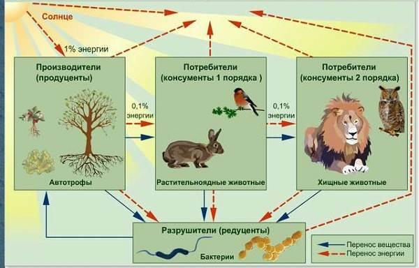Что-такое-биоценоз-Виды-структура-роль-и-примеры-биоценоза-8