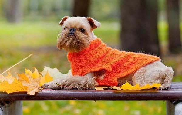 Маленькие-породы-собак-Описание-особенности-названия-и-виды-маленьких-собак-24