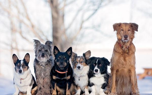 Средние-породы-собак-Описания-особенности-названия-и-виды -средних-пород-собак-1