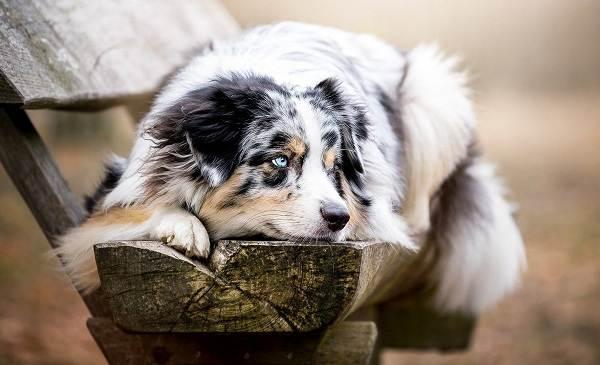 Средние-породы-собак-Описания-особенности-названия-и-виды -средних-пород-собак-10