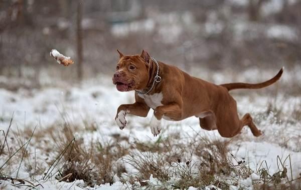 Средние-породы-собак-Описания-особенности-названия-и-виды -средних-пород-собак-15