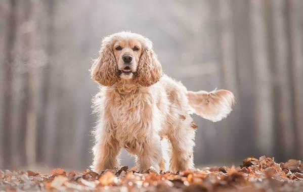 Средние-породы-собак-Описания-особенности-названия-и-виды -средних-пород-собак-34