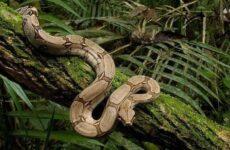 Виды змей. Описания, названия и особенности видов змей