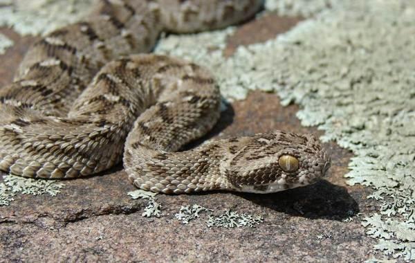Виды-змей-Описания-названия-и-особенности-видов-змей-10