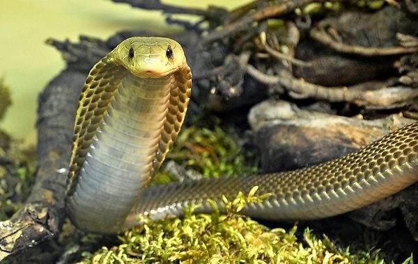 Виды-змей-Описания-названия-и-особенности-видов-змей-13