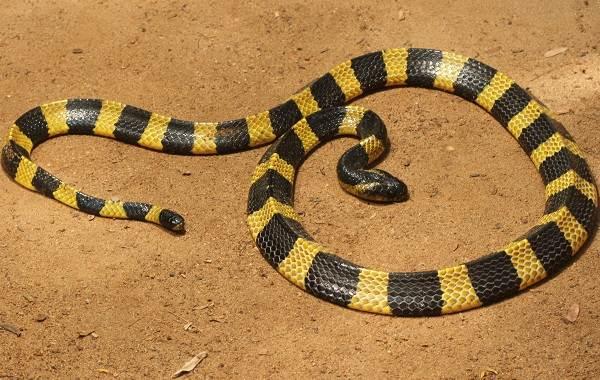 Виды-змей-Описания-названия-и-особенности-видов-змей-14