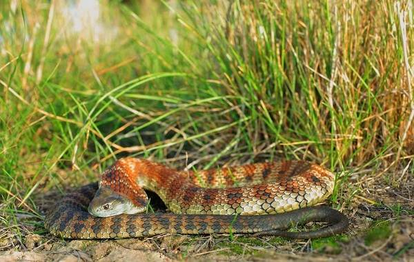 Виды-змей-Описания-названия-и-особенности-видов-змей-15