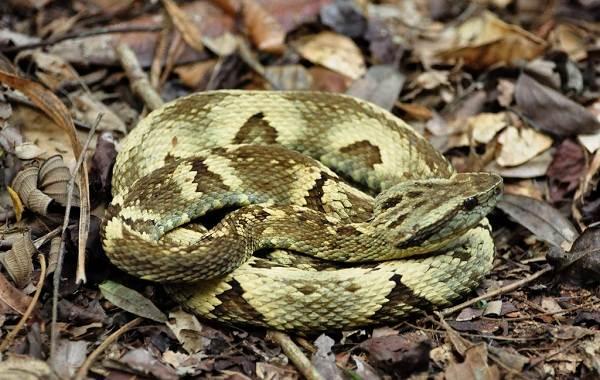 Виды-змей-Описания-названия-и-особенности-видов-змей-16