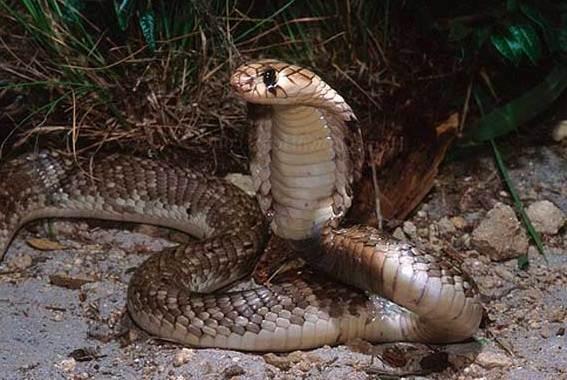Виды-змей-Описания-названия-и-особенности-видов-змей-18