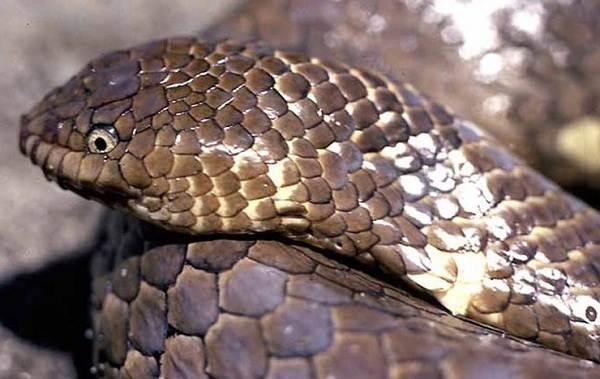 Виды-змей-Описания-названия-и-особенности-видов-змей-19