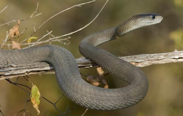 Виды-змей-Описания-названия-и-особенности-видов-змей-2