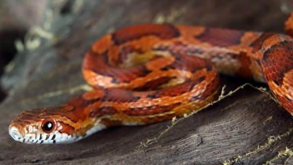Виды-змей-Описания-названия-и-особенности-видов-змей-20