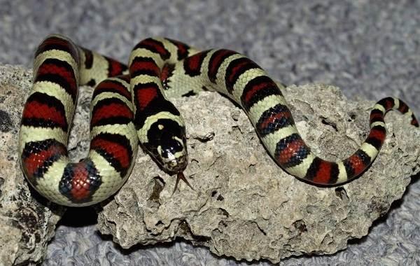 Виды-змей-Описания-названия-и-особенности-видов-змей-21