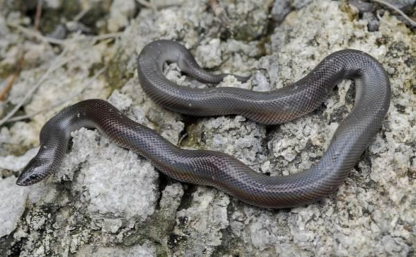 Виды-змей-Описания-названия-и-особенности-видов-змей-22