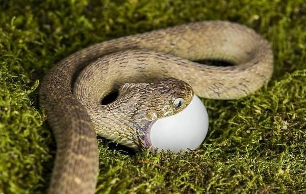 Виды-змей-Описания-названия-и-особенности-видов-змей-23