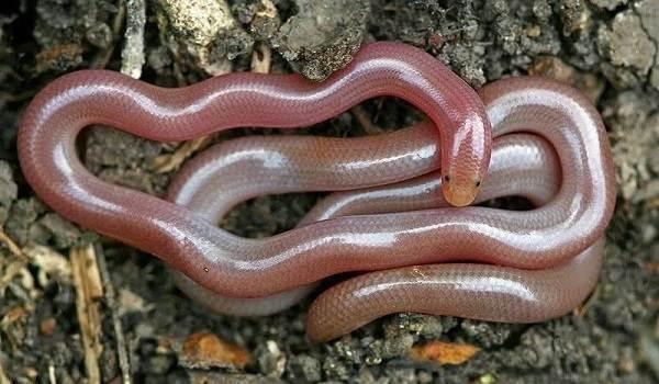 Виды-змей-Описания-названия-и-особенности-видов-змей-24