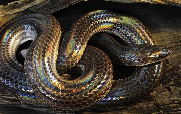 Виды-змей-Описания-названия-и-особенности-видов-змей-25