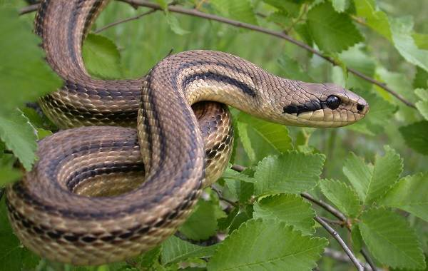 Виды-змей-Описания-названия-и-особенности-видов-змей-27