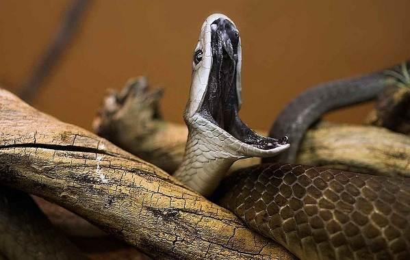 Виды-змей-Описания-названия-и-особенности-видов-змей-3