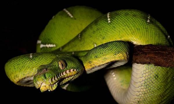 Виды-змей-Описания-названия-и-особенности-видов-змей-30